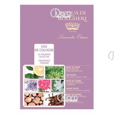 Dr. Taffi odekolonas EDC Acqua Di Bolgheri Lavanda universalus, 80 ml 2